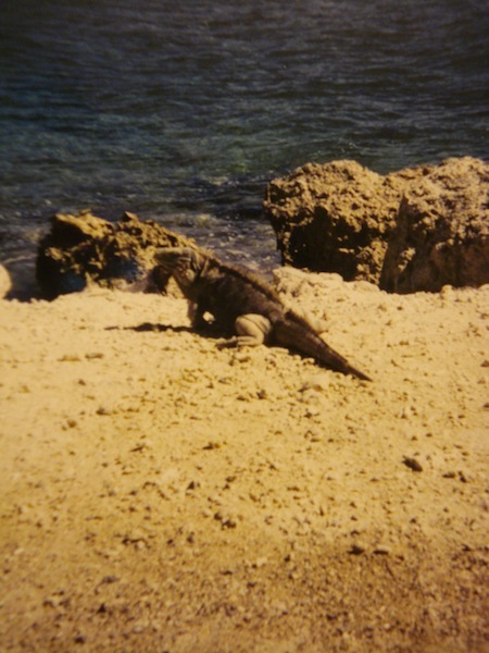 Iguana on GTMO, taken by Kenneth Pace